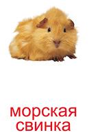 domashnie_pitomtsi_kartochki-4_resize2.jpg