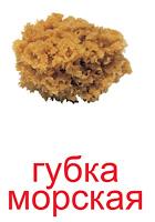 elementi_prirodi_kartochki-3_resize2.jpg