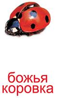 nasekomie_kartochki-5_resize2.jpg