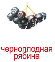 yagodi_kartochki-13_resize2.jpg
