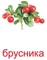 yagodi_kartochki-16_resize2.jpg