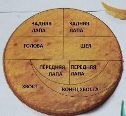 shema_deleniya_korzha.jpg